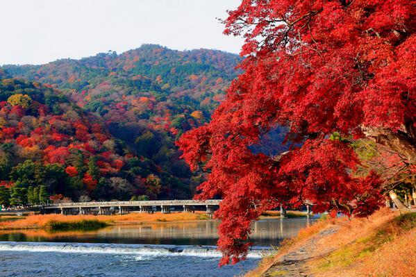 arashiyama_aki